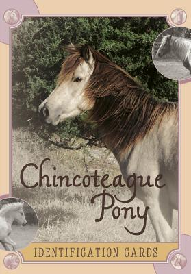 Chincoteague Pony Identification Cards By Szymanski , Lois/ Kantjas, Linda (PHT)